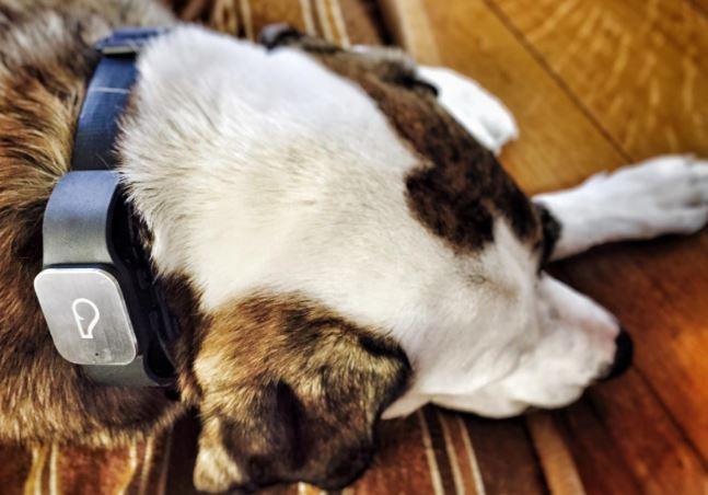 Whistle GPS Pet Tracker