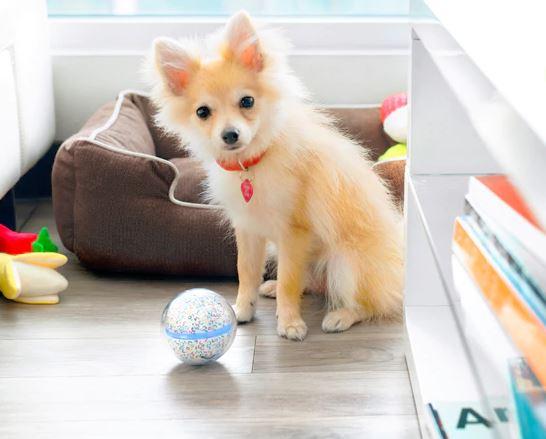 Pebby Smart Ball